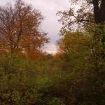 Schlosspark Glienicke - Blick Potsdam