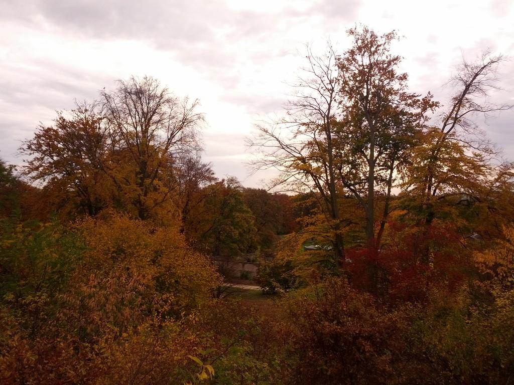 Waldstück im Park Glienicke